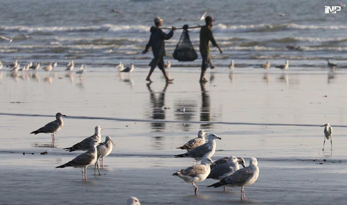 KARACHI: A view of migrating birds at Sea view of beach  INP